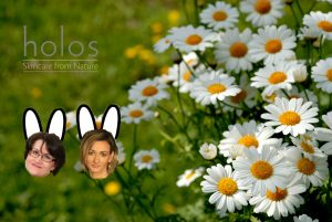 Chamomile field Holos Easter offer
